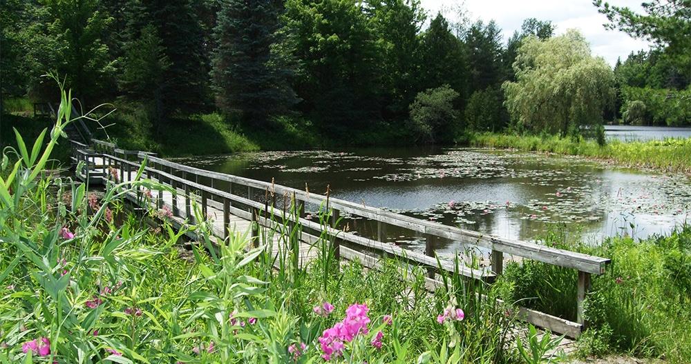 Tiffin Centre Baby Bear Bridge in Summer